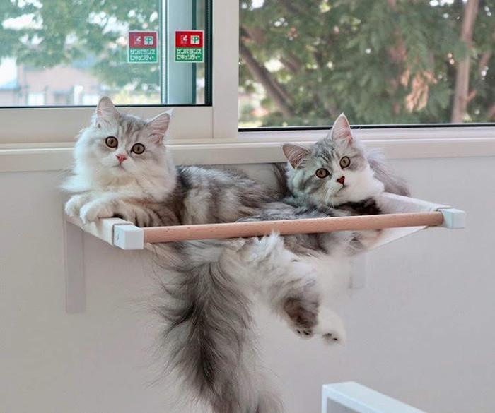 猫がしっぽを床に叩きつけるのはなぜ?しっぽをパタパタする心理