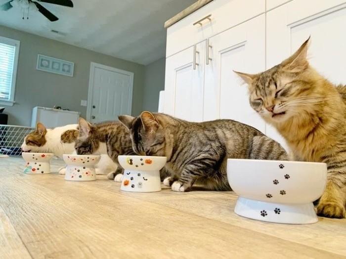 猫の食費にかかるお金はどれくらい?猫を飼うのに必要な年間費用を大公開