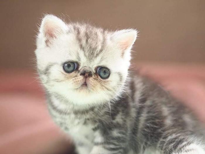 子猫に乳離れをさせる方法と対処法を徹底解説!おすすめの離乳食11選
