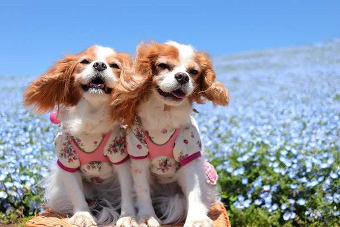 神奈川の保護犬施設とカフェ紹介|譲渡会やボランティア募集情報