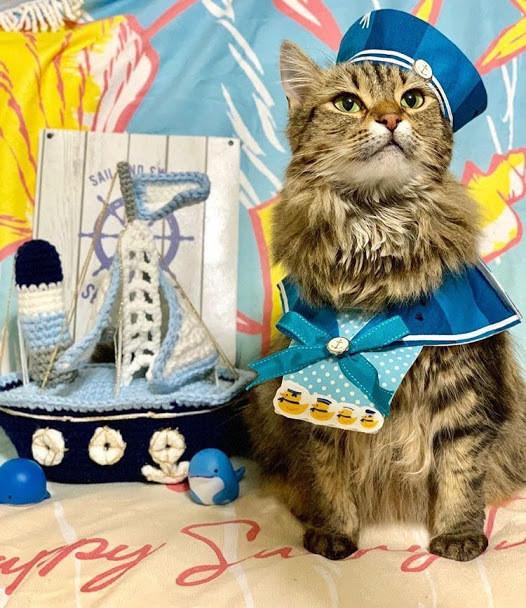 猫とドライブや旅行がしたい!注意点とマナーについて知ろう!