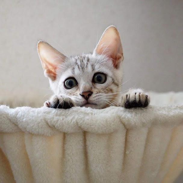 東京でキュートなショップで猫グッズを買うならこれ!おすすめグッズ10選