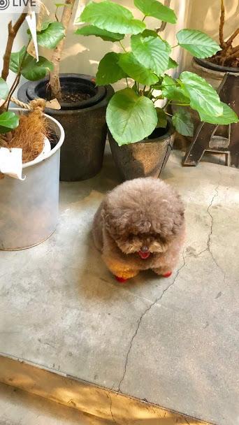 極小サイズのおすすめ犬種7選|極小犬の特徴や会える場所は?