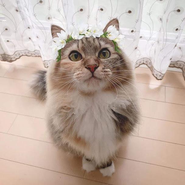 猫に懐かれる方法とは?猫はとても警戒心が強く自由ないきもの!