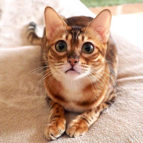 猫が好きな匂いとは?猫の好きな匂いを知って仲良くなろう!
