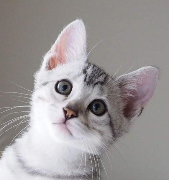 猫トライアルを失敗しないための7つの心得|失敗の理由と対処法