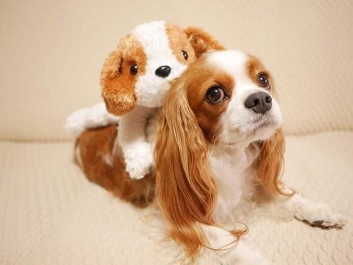 ブサカワ犬ってどんな犬種?愛嬌たっぷり人気のブサカワ犬11選