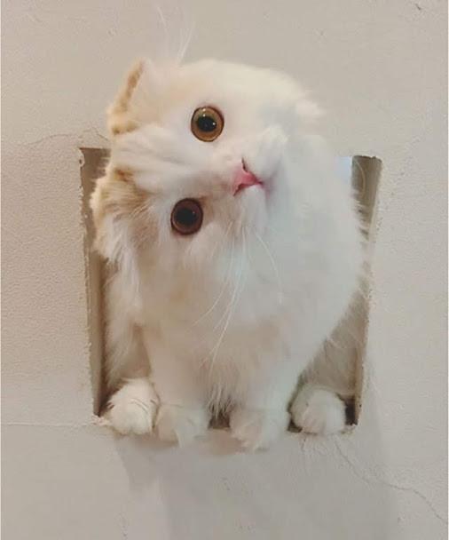 なぜ猫はスリスリしながら急に噛むの?|猫が甘え噛みをする心理