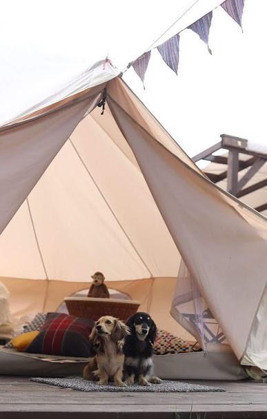 千葉県のグランピングは癒しの宿泊におすすめ!充実した設備が魅力的