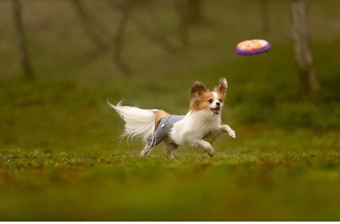 おすすめの犬の知育玩具12選!噛むタイプや投げるタイプなどご紹介
