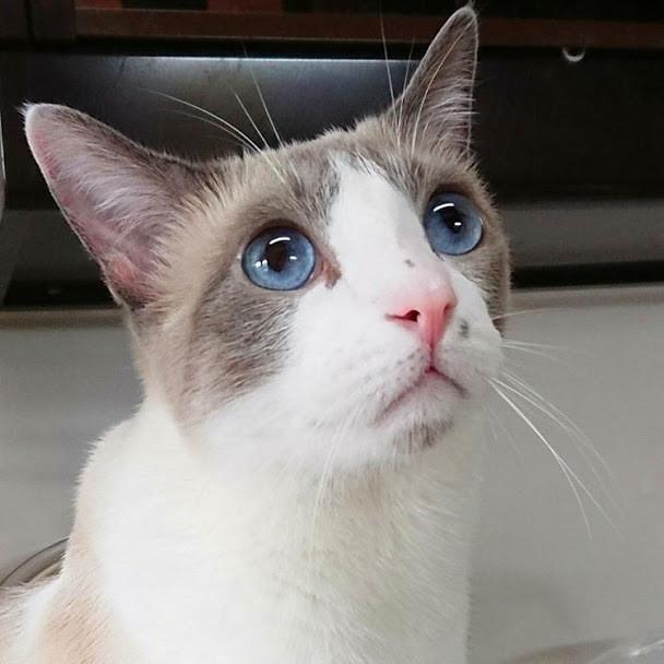 猫の機嫌が良い時の6つの仕草とは?鳴き声や行動から猫の気持ちを知る方法
