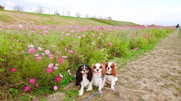 札幌にあるおすすめドッグラン34選|愛犬と一緒に遊ぼう!無料施設もあり