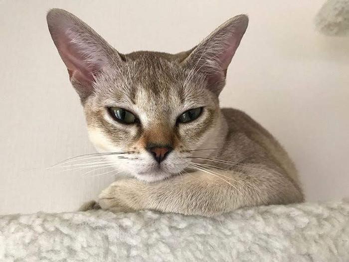 怒る猫の対処法|猫が怒る理由と怒ったとき取る行動を紹介します!