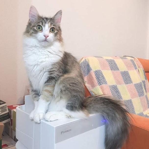 猫用の全自動トイレおすすめ5選|知っておきたいメリット、デメリット