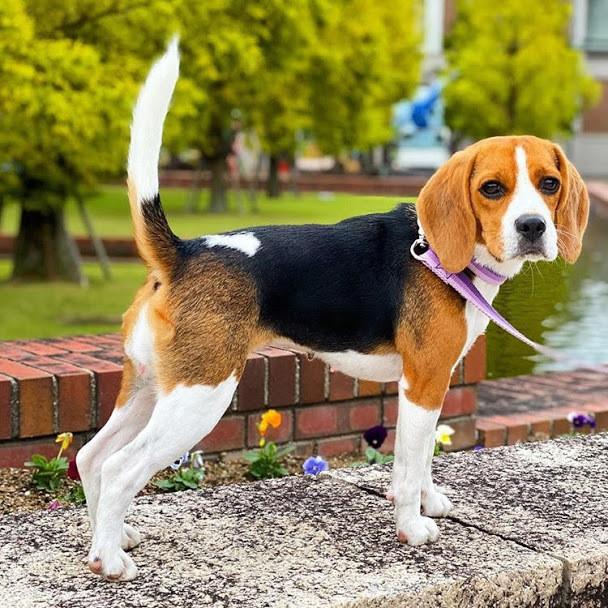 犬はなぜ忠誠心が強いの?その理由や忠誠心が特に強い犬を紹介