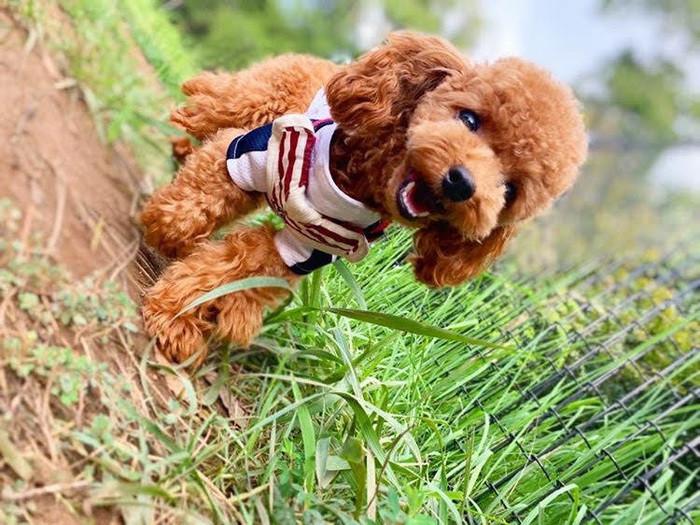 保護犬とカフェで触れあおう!関東にある保護犬カフェを紹介