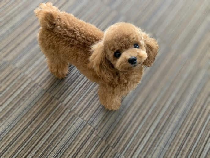 夢の島で犬と遊びたい!江東区周辺のおすすめドッグラン19選