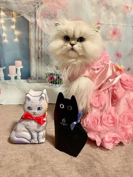 猫服のおすすめ商品ランキング10|猫服の種類にはどんなものがある?