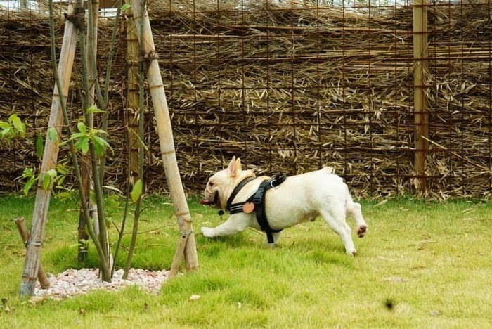 臆病な犬の特徴としつけ方|臆病な犬にならない為の対策法を解説!