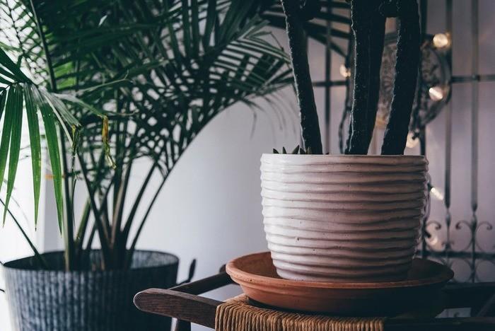 風水で仕事運をUPさせる方法、色やインテリア・観葉植物の使い方