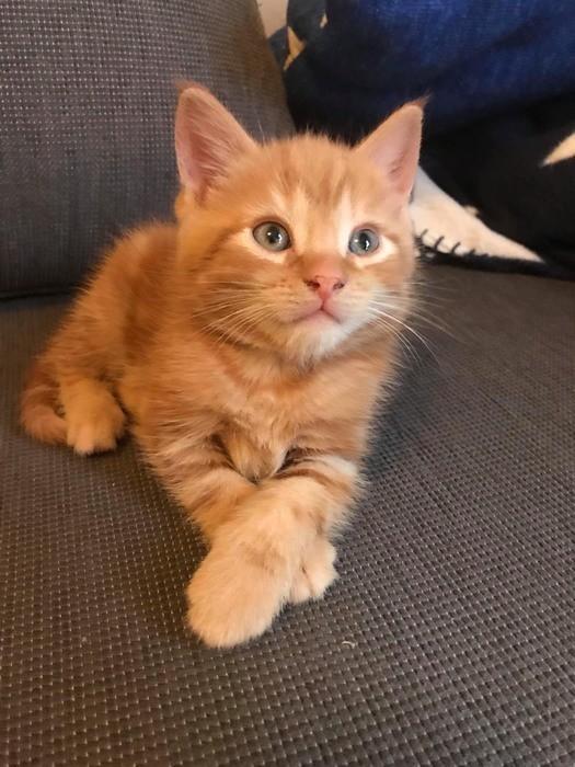 猫のふみふみする理由とは?ふみふみ以外の愛情表現もご紹介